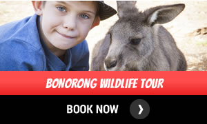 Bonorong Wildlife Tour